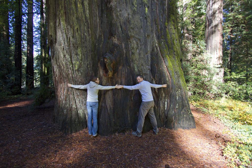 20101025_redwoods_0067