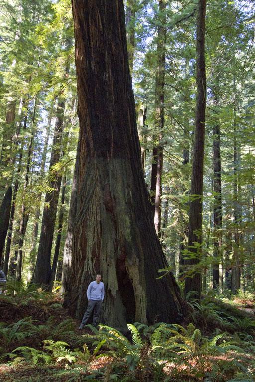 20101102_redwoods_2161