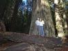 20101102_redwoods_2124
