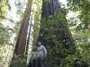 20101102_redwoods_2143